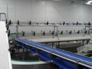фото конвейер с модульной лентой 8